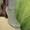 женс сапоги из натур кожи за 1500 руб  #1077618