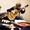 Обучения игре на гитаре #1485205