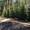 Посадка и продажа крупномерных деревьев  #738523