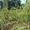 Ива шаровидная высотой 1, 3-1, 5 метра. Осуществляем посадку деревьев . #700168