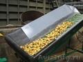 оборудование для переработки овощей (картофель,лук,свекла,морковь) - Изображение #4, Объявление #316490