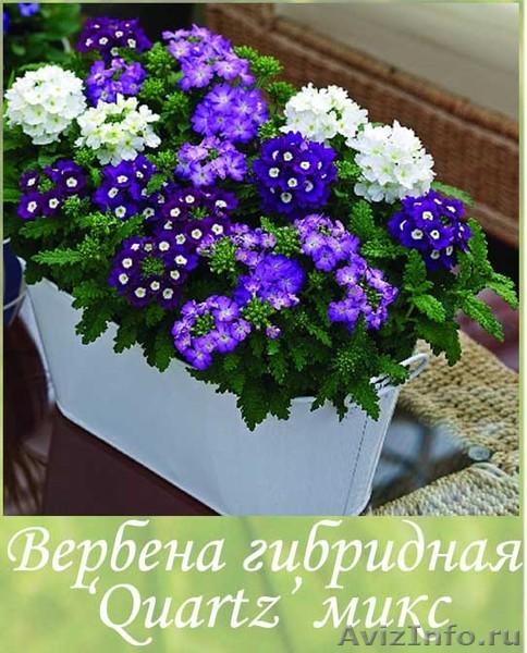 Купить рассаду цветы