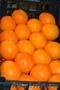 Оптовые поставки фруктов от Fruit Life Company