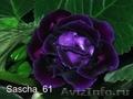 Комнатные цветы: фиалки, глоксинии, пеларгонии - Изображение #2, Объявление #945201