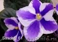 Комнатные цветы: фиалки, глоксинии, пеларгонии - Изображение #3, Объявление #945201