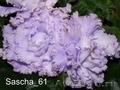 Комнатные цветы: фиалки, глоксинии, пеларгонии - Изображение #4, Объявление #945201