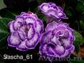 Комнатные цветы: фиалки, глоксинии, пеларгонии - Изображение #5, Объявление #945201